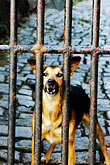 aggression stock photography | Dogs, Guard dog, image id 4-960-1385