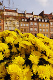 old houses with yellow flowers in the foreground stock photography | Poland, Warsaw, Old houses with yellow flowers in the foreground, Rynek Starego Miasta, Old Town Square, image id 7-700-7601