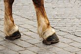 horizontal stock photography | Poland, Warsaw, Horse, closeup of feet, on cobbled street, image id 7-700-7783
