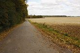 europe stock photography | Poland, Jezowe, Country road between forest and field, image id 7-715-7979