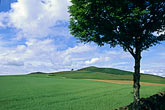 fertile stock photography | Scotland, Angus, Fields near Glamis, image id 1-524-56