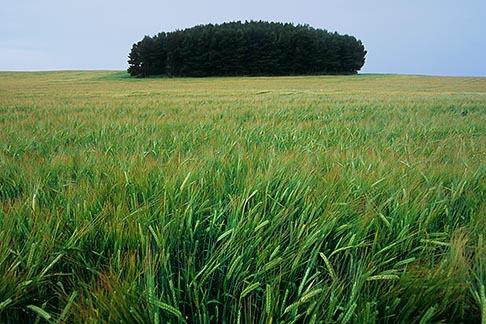 image 1-537-21 Scotland, Aberdeenshire, Fields