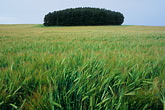 centred stock photography | Scotland, Aberdeenshire, Fields near Banff, image id 1-537-21