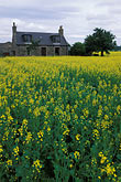 yellow stock photography | Scotland, Aberdeenshire, Farmhouse, Rothienorman, image id 1-537-24