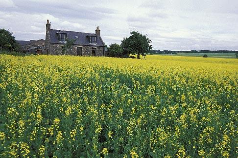 image 1-537-26 Scotland, Aberdeenshire, Farmhouse, Rothienorman