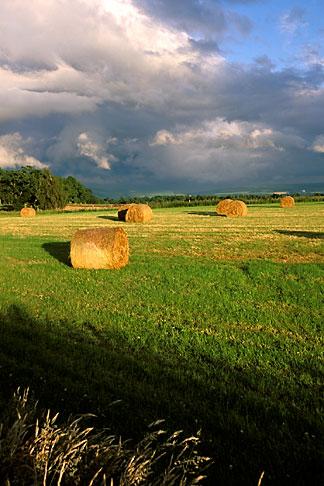 image 1-537-38 Scotland, Aberdeenshire, Afternoon light on fields