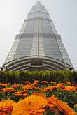 flower stock photography | China, Shanghai, Jin Mao Tower, Pudong, image id 7-620-120