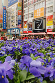 flower stock photography | China, Shanghai, Nanjing Road, Pedestrian shopping street, image id 7-620-3184