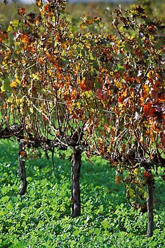 image 1-410-31 South Africa, Stellenbosch, Vineyards, Jonkershoek Valley