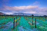 early morning mist stock photography | South Africa, Franschhoek, Vineyards, Franschhoek Valley, image id 1-415-35