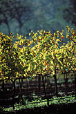 luminous stock photography | South Africa, Franschhoek, Vineyards, Franschhoek Valley, image id 1-415-5