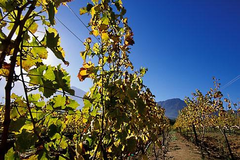 image 1-415-50 South Africa, Franschhoek, Vineyards, Franschhoek Valley
