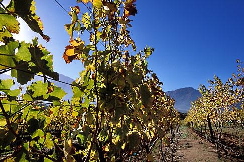 image 1-415-51 South Africa, Franschhoek, Vineyards, Franschhoek Valley