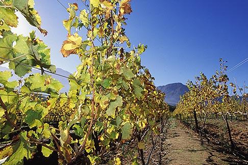 image 1-415-52 South Africa, Franschhoek, Vineyards, Franschhoek Valley