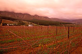 twilight stock photography | South Africa, Franschhoek, Vineyards, Franschhoek Valley, image id 1-415-68
