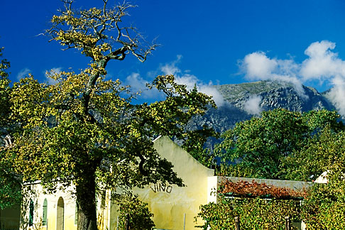 image 1-416-15 South Africa, Franschhoek, Dassenberg winery