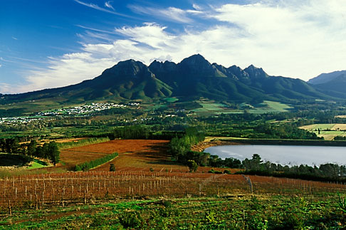 1-419-40 stock photo of South Africa, Helderberg, Vineyards and mountains, Vergelegen Wine Estate