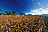 africa stock photography | South Africa, Helderberg, Vineyards and mountains, Vergelegen Wine Estate, image id 1-419-51