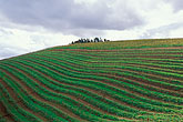 hillside stock photography | South Africa, Stellenbosch, Vineyards, Tokara winery, image id 1-421-36