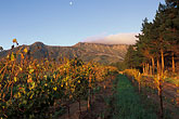 morning light stock photography | South Africa, Stellenbosch, Moonrise over Simonsberg, Delheim winery, image id 1-421-72
