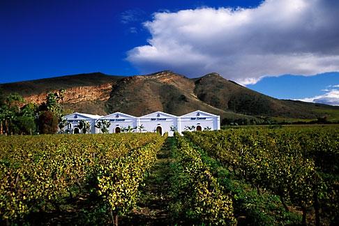 image 1-423-11 South Africa, Robertson, Vineyards, Van Loveren Wine Estate