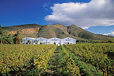 lush stock photography | South Africa, Robertson, Vineyards, Van Loveren Wine Estate, image id 1-423-11