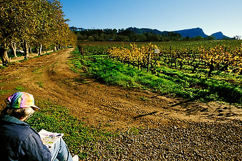 image 1-423-73 South Africa, Constantia, Painter and vineyards, Groot Constantia Wine Estate