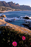 shoreline wildflowers stock photography | South Africa, Cape Town, Camps Bay and the Twelve Apostles, image id 5-448-36