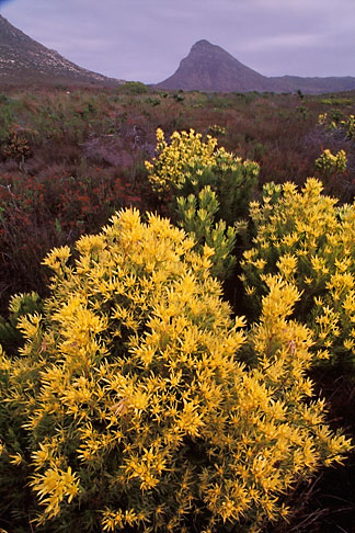 image 5-490-30 South Africa, Cape Peninsula, Cape of Good Hope National Park