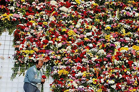 image S4-545-849 Spain, Madrid, Flowers