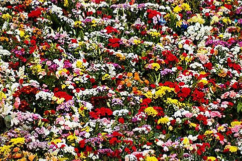 image S4-545-858 Spain, Madrid, Flowers