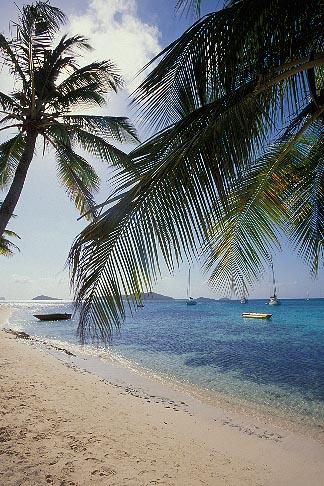 image 3-610-71 St Vincent, Tobago Cays, Horseshoe Reef, Petit Bateau island