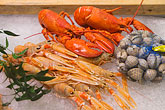 foodstuff stock photography | Food, Assorted Seafood, Lobster, prawns and clams, image id 5-700-2043