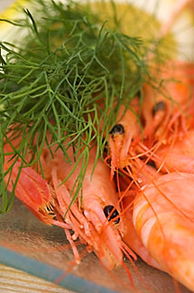 5-710-5682 stock photo of Sweden, West Sweden, Shrimp