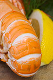 garnish stock photography | Food, Shrimp with lemon, image id 5-710-5693