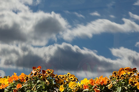 image 5-720-3270 Clouds, Clouds reflected in window with flowers