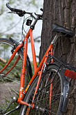 tree stock photography | Sweden, Stockholm, Bicycle, image id 5-720-7134
