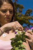 one person stock photography | Sweden, Grinda Island, Making a flower wreath, image id 5-730-3528