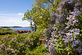 horizontal stock photography | Sweden, Grinda Island, Lilac bushes and waterfront, image id 5-730-6408