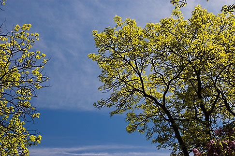 image 5-730-6410 Sweden, Grinda Island, Tree and sky