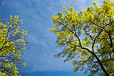 blue background stock photography | Sweden, Grinda Island, Tree and sky, image id 5-730-6413