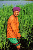 lush stock photography | Thailand, Sukhothai, Rice farmer, image id 0-381-49