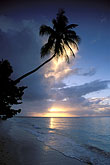 palms and clouds stock photography | Tobago, Sunset, Pigeon Point, image id 8-49-5
