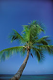 palm fronds stock photography | Tobago, Early morning, Pigeon Point, image id 8-55-4