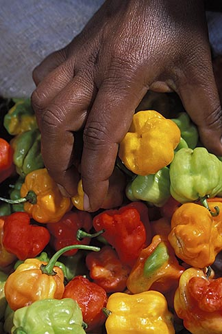 image 8-29-33 Food, Woman picking up red yellow and green peppers, close up of hand