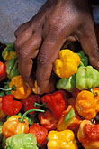 vertical stock photography | Food, Woman picking up red yellow and green peppers, close-up of hand, image id 8-29-33