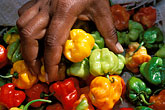 sell stock photography | Food, Woman picking up red yellow and green peppers, close-up of hand, image id 8-29-35