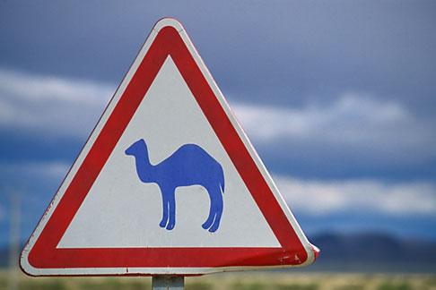 image 3-1100-22 Tunisia, Camel crossing