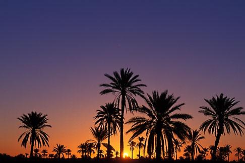 image 3-1100-23 Tunisia, Nefta, palms at sunrise