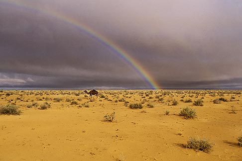 image 3-1100-42 Tunisia, Camel and rainbow